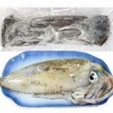 澎湖海釣魷魚(軟絲)<1尾450g>(菓葉盧A)
